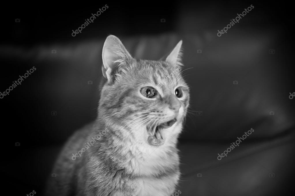 chatte noir photos