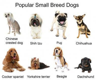 Different breeds of dogs together