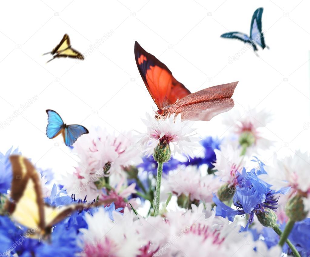 Цветы летающие