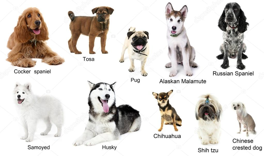 Pictures Of Different Kinds Of Dog Breeds