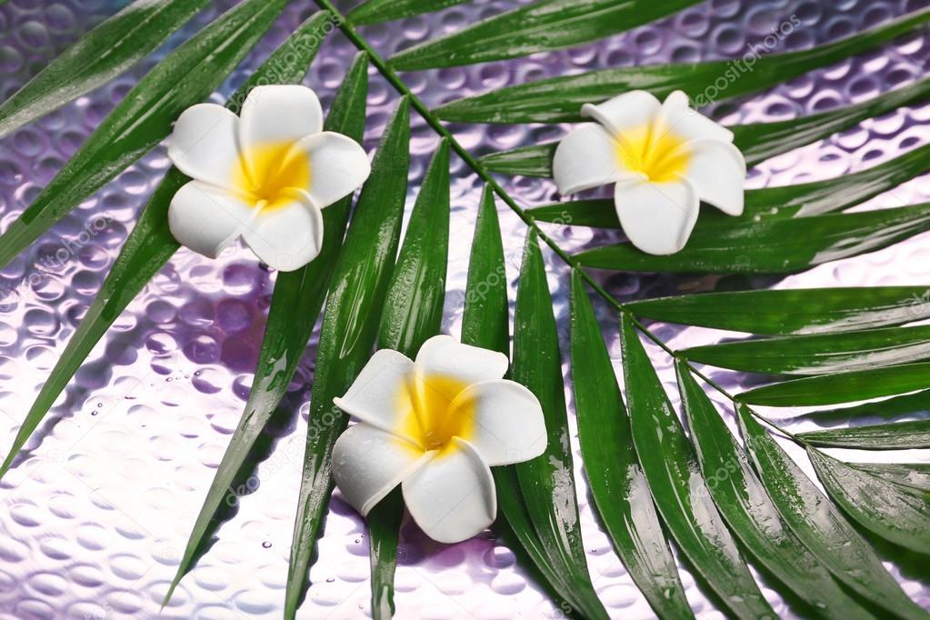 Schöne Komposition Frangipani Blume auf Palme Blätter, Nahaufnahme ...