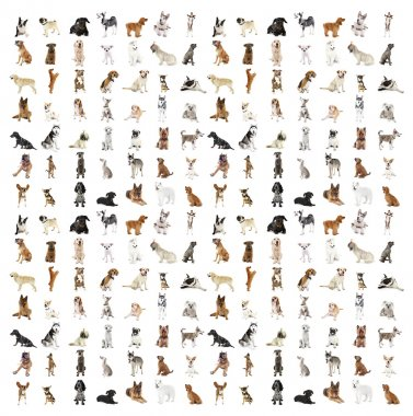 Large group of dog breeds