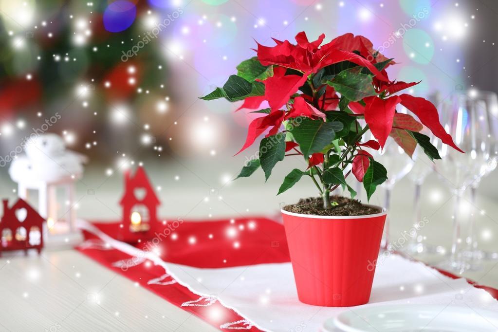 Weihnachten Hintergrund mit Weihnachtsstern — Stockfoto © belchonock ...