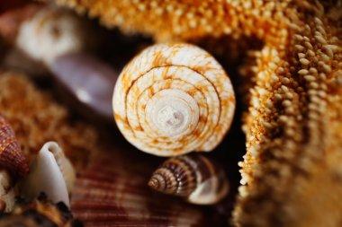 Sea star and seashell