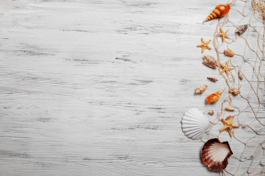Seashells on light background