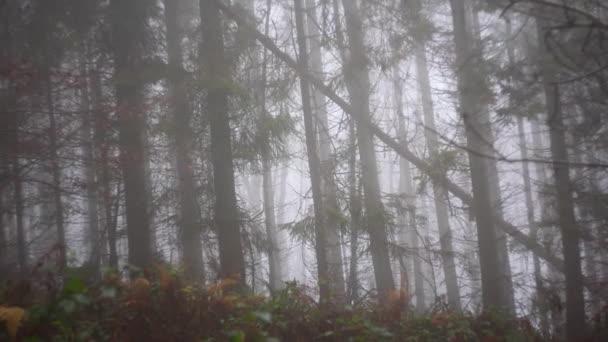 Les pokrytý mlhou. Podzimní krajina lesů.