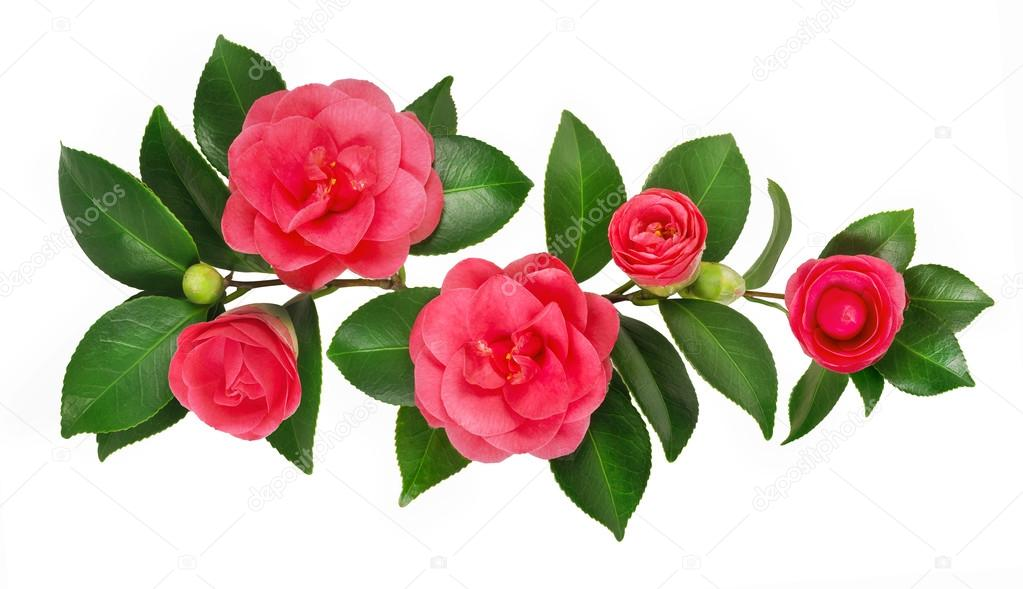 postal de flores hermosas