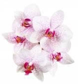 orchidej květiny close-up