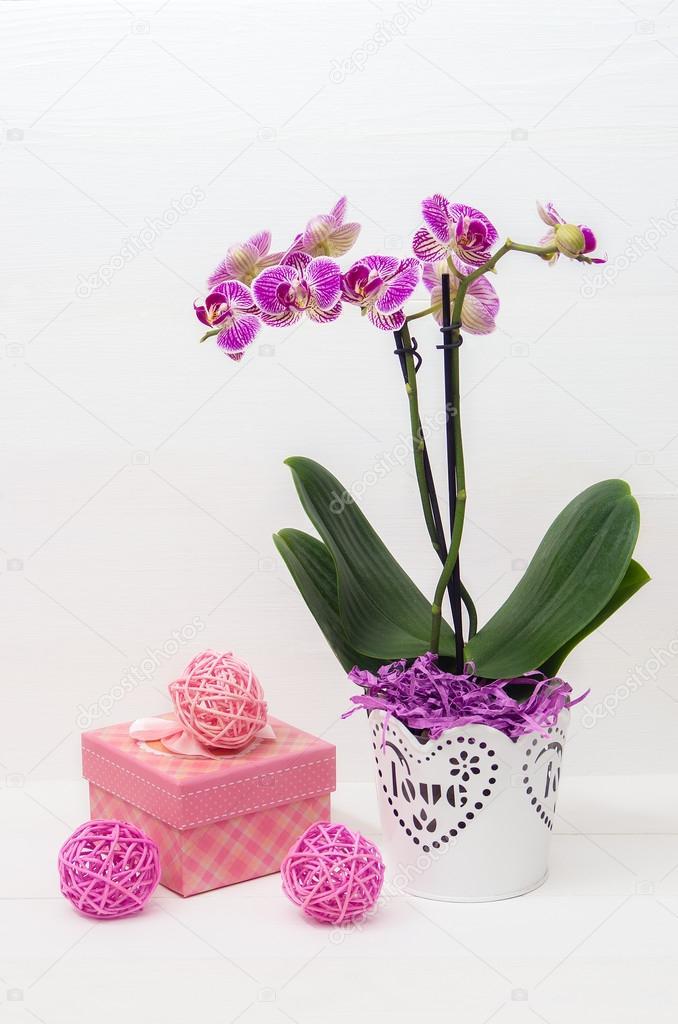 podarochnie-tsveti-orhideya-foto-dostavka-tsvetov-v-ukrainu-v-den-zakaza-moskva