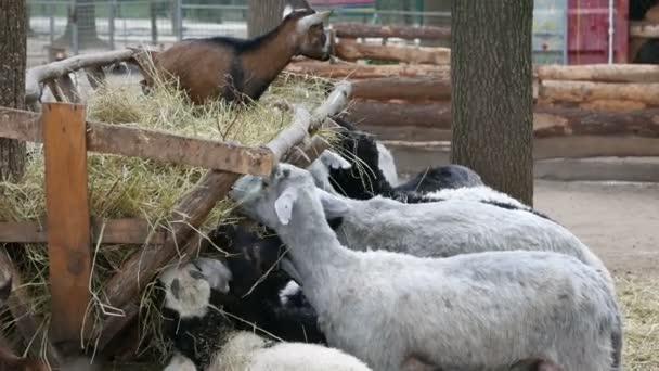 ovce a kozy