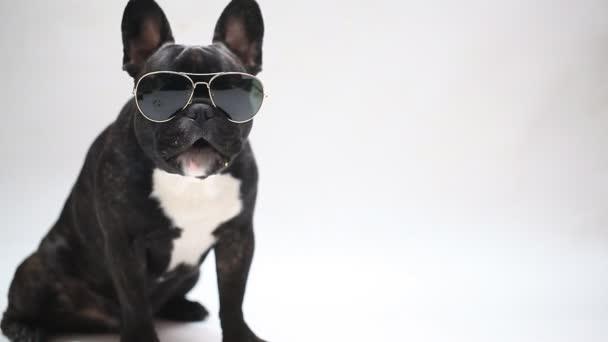 kutya tenyészt Francia Bulldog szemüveg