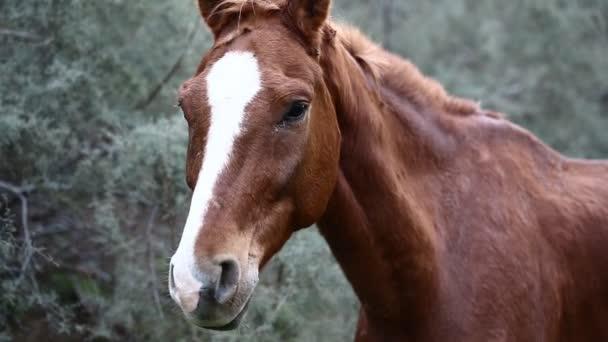 hnědá divoký kůň