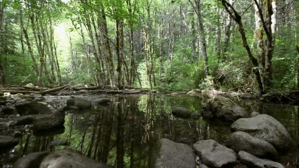 HD Film vodní odraz podél malebných turistická stezka do Dry Creek Falls v kaskádě uzamkne Oregon 1080p
