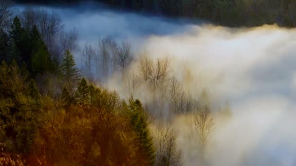 Ultra vysoké rozlišení 4k času zanikla film silné kymácení mlhy nad Crooked River z Jonsrud hlediska v Sandy Oregon jeden brzy ráno za úsvitu 409