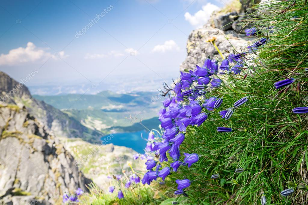 Beautiful violet flowers in the mountains