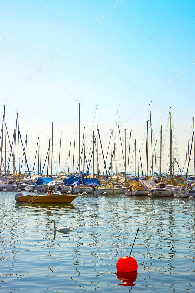 Swans and boats in marina in Geneva lake bay harbor in Lausanne,