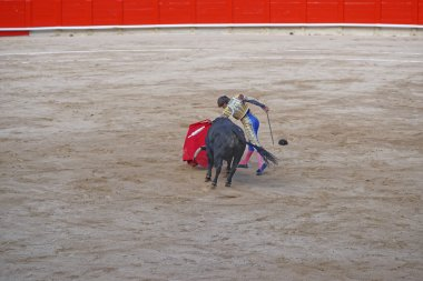 Bullfighter angers the bull to show its temper and character