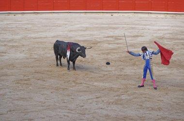 Bull looks at the sword in bullfighter's hand