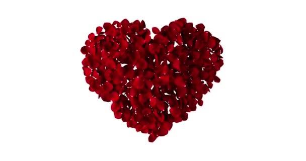 Červené srdce růží létání s vír na bílém pozadí, láska a valentine den koncept