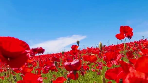 louka Rudého máku proti modré obloze mraky v větrný den, půdy, krajiny, venkovských pozaďových