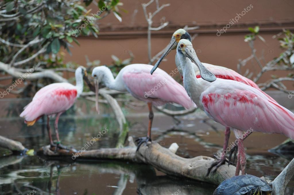 Εικόνα του μεγαλύτερου πουλί