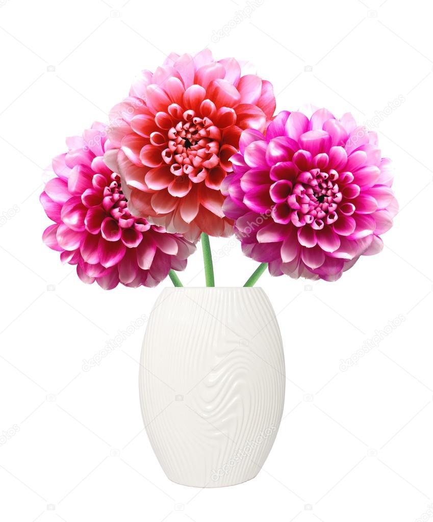 Pink Dahlia Autumn Flowers On Vase Isolated On White Stock Photo