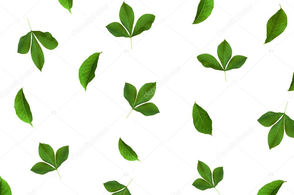 Pattern with green leaves at white background. Flat lay, top vie