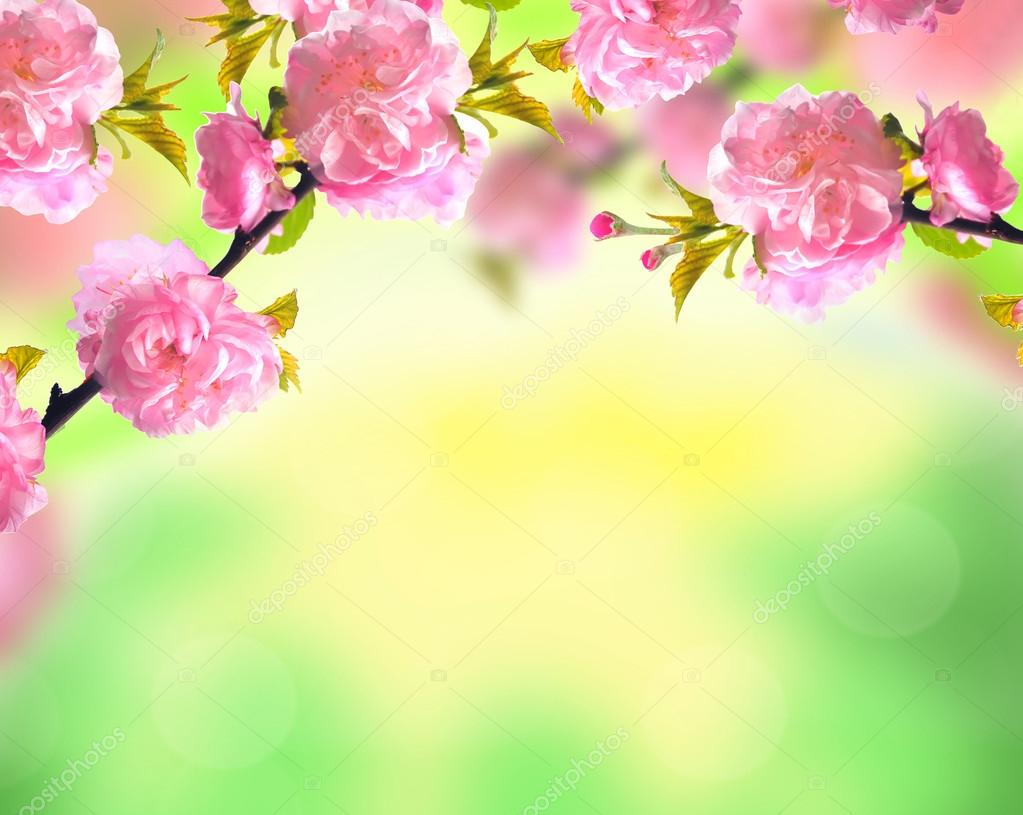 Download wallpaper from Earth Flowers Nature Rose with tags ... | 815x1023