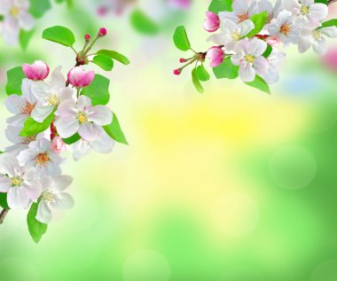 Beautiful white spring blossom on blurred nature background stock vector