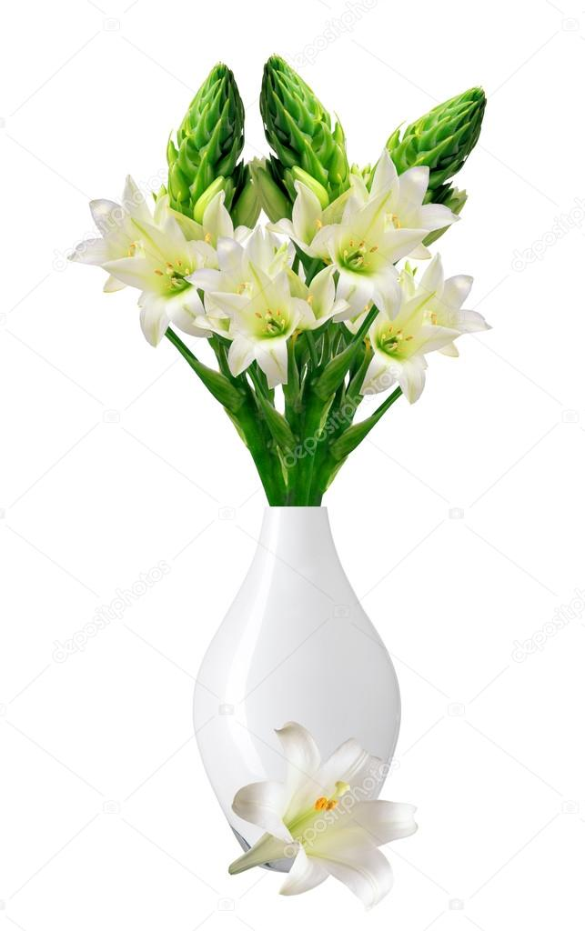 Beautiful White Lily In Vase Isolated On White Background Stock