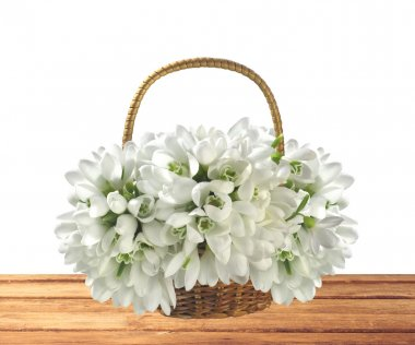 beautiful bouquet of snowdrops in basket on wooden table isolate