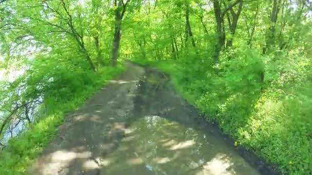 Straße im Waldfrühling