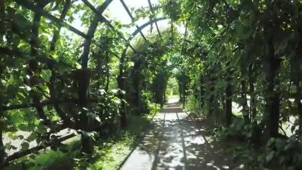 Zelená alej v zahradě