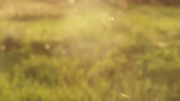 Szúnyog hátország lenyugvó nap repülő