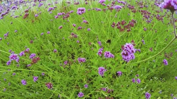 poszméhek, virágok
