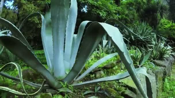 Kaktusy a aloe