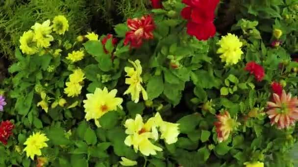 Květinová zahrada v městském parku