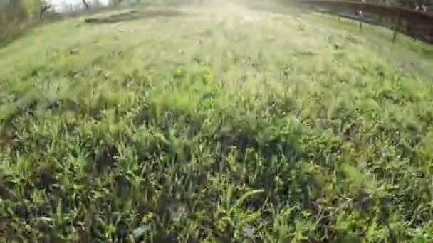 Mladá tráva na přírodu