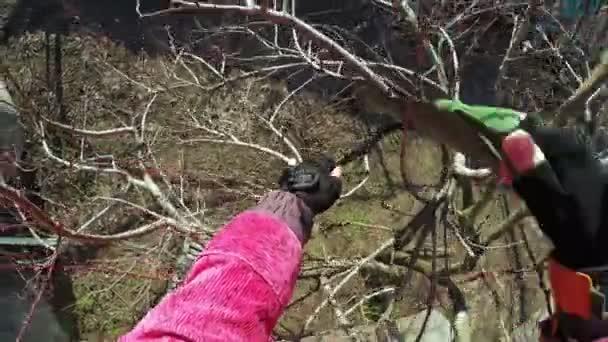 Prořezávání stromů zima