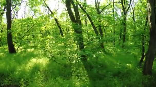 Frühlingswald auf der Natur