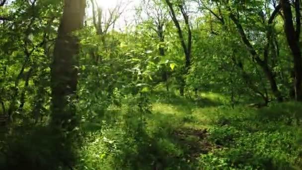 Jarní Les na přírodu