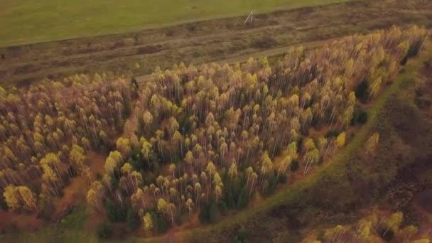Podzimní krajina se žlutým lesem a zeleným polem. Klip. Letecký pohled na krásnou zemědělskou půdu a okraj lesa na začátku podzimu, koncepce chovu a hospodaření.
