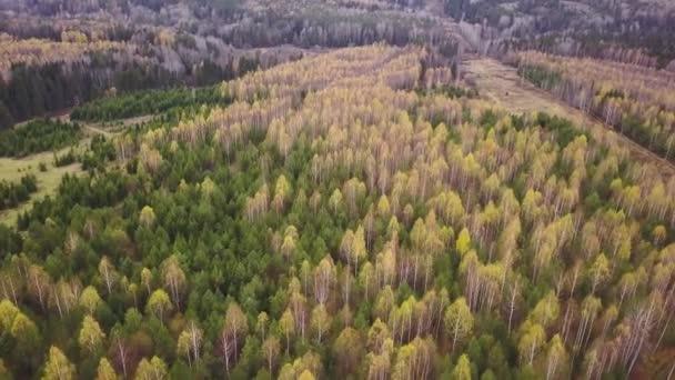Horní pohled na krásné podzimní lesy se zelenými a žlutými stromy za oblačného dne. Klip. Krásná krajina podzimních lesů s pestrou paletou listoví. Živé panorama barevných stromů na podzim