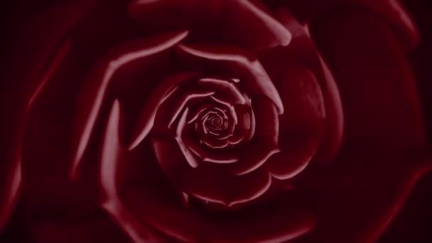 Abstraktní květinové pozadí barevného točení šťavnaté, bezešvé smyčky. Animace. Krásná rotující tmavě červená rostlina.