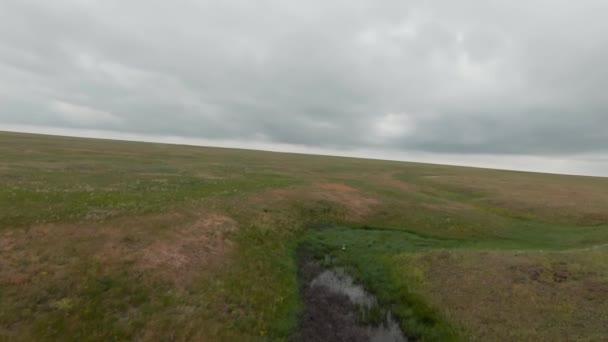 Einsamer Kran auf dem Feld. Schuss. Draufsicht auf einen großen weißen Vogel, der im Feld steht. Schöne Kranich steht im grünen Feld auf dem Hintergrund des Horizonts mit bewölktem Himmel
