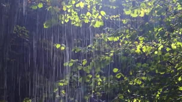 pioggia di foresta