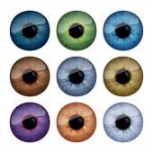 Fotografie Set of human eyes iris