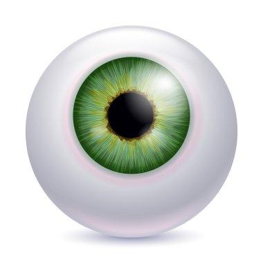 Human eyeball iris pupil - green color.