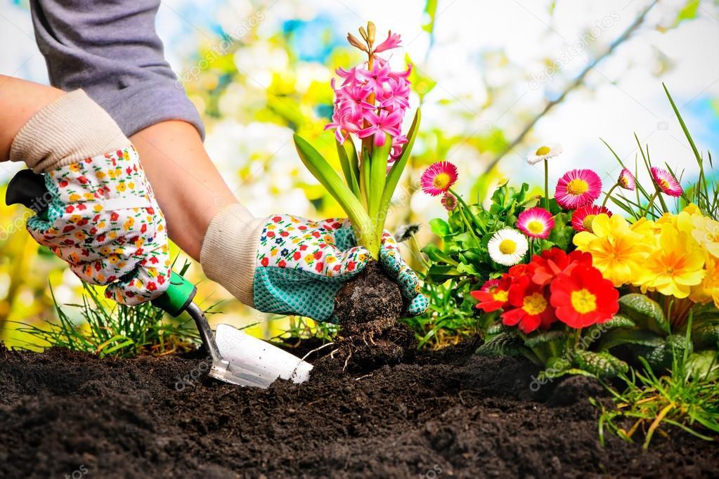 советы картинка сажать сад вспомнить