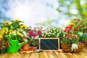 Zahradnické nářadí a květiny na terase i
